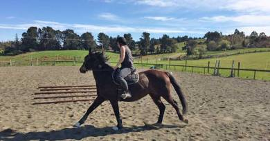 Online survey of horse owners explores equine back problems