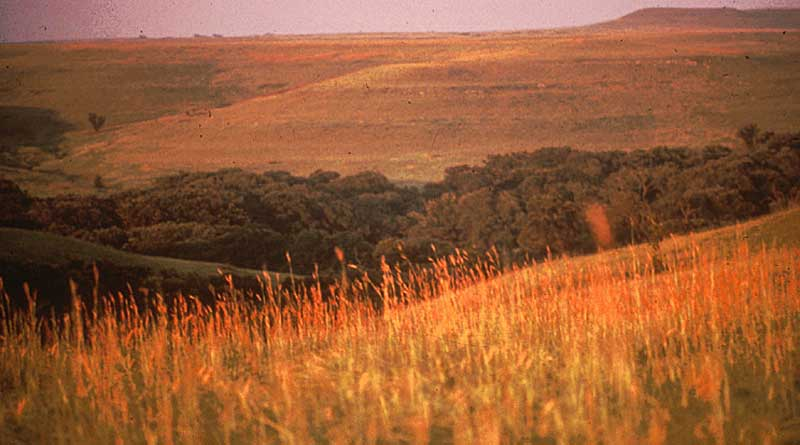 Climate change could change the way North America's tallgrass priarie looks. Photo: Kansas State University