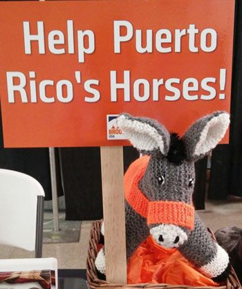 Fund raising is under way to help equines caught up in Hurricane Maria, which struck the US territory of Puerto Rico last week.