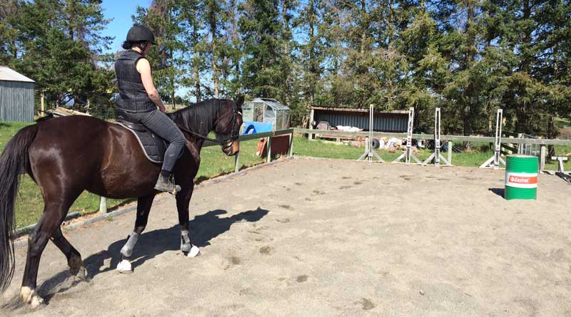BETA is bringing its Saddle Fitting Course to New Zealand in late 2018.