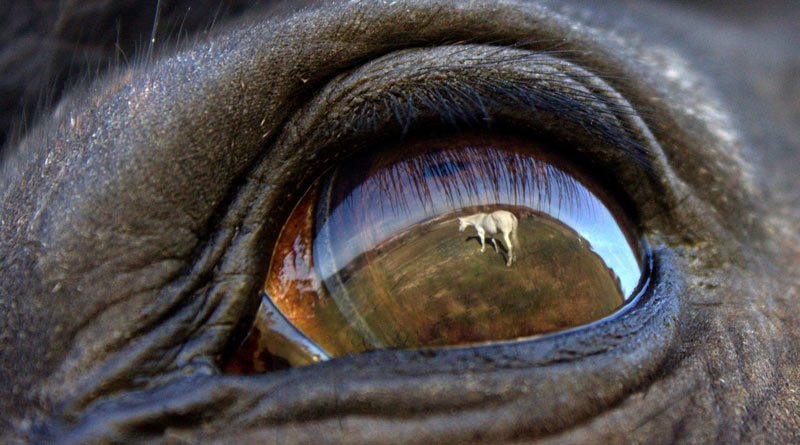 The winning amateur picture in the 2014 FEI Solidarity World Photo Grand Prix.