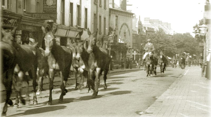 Mules gathered in Minehead before heading to WW1.