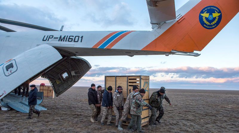 Offloading the kulan after their long helicopter flight.