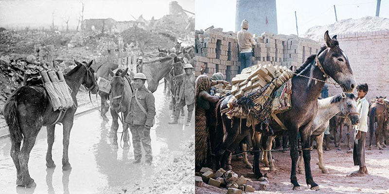 Then and now: Equines are still beasts of burden in the developing world, as they were during WW1.