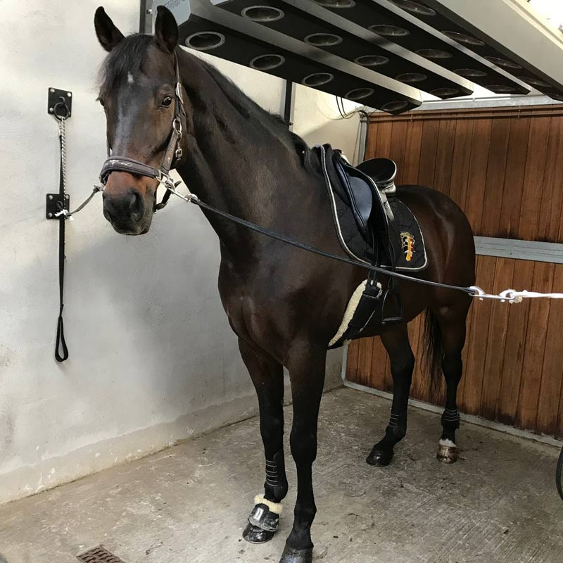Lucky Dance in October 2017. After six weeks on his new diet, there was a major turnaround, and he's now back in competition.