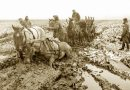 They were heroes: WWI war horses honored in new, permanent record