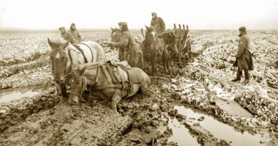 Horses endured treacherous conditions on the battlefields of war.