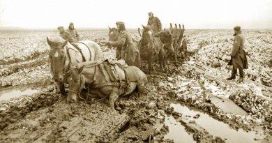 Horses endured treacherous conditions on the battlefields of war.
