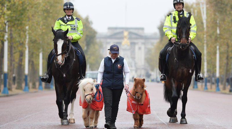 Little and Large! Metropolitan Police Horses, Merlin and Quixote, were joined on patrol in central London by some special helpers, Teddy and Doris, ahead of their appearances at Olympia, the London International Horse Show next month.