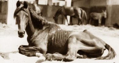 An old war horse taken in by Dorothy Brooke in Egypt.
