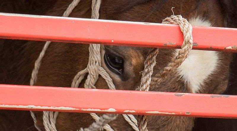 A proposal to halve the current maximum journey length to 12 hours have the support of international charity World Horse Welfare.