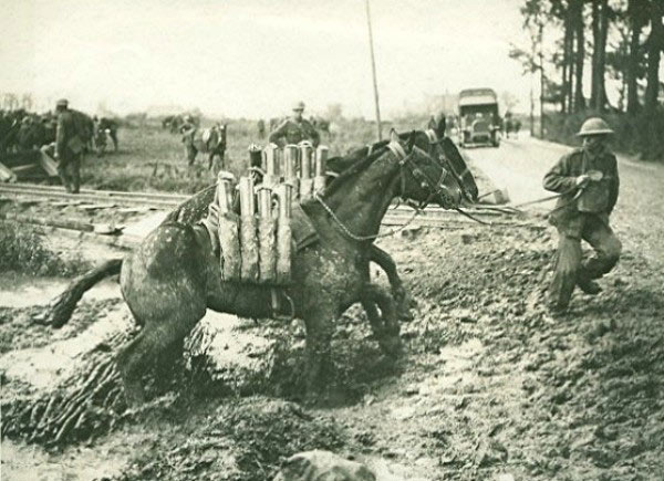 Horses carrying ammunition in the mud at Flanders in WWI.
