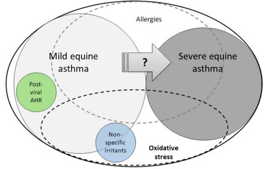 Equine asthma characteristics. Oxidative stress plays a role in both mild and severe forms of equine asthma.