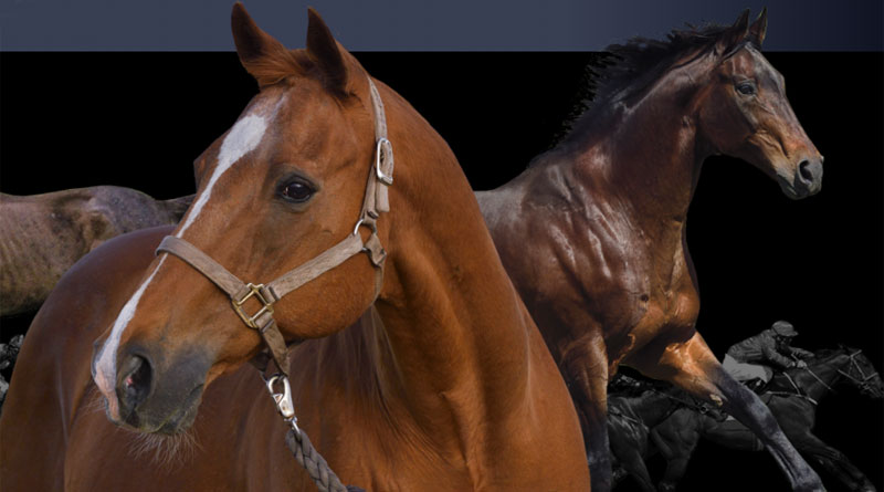 "Nine of Secretariat's last living progeny feature in a calendar of ""Secretariat's Living Legends""."