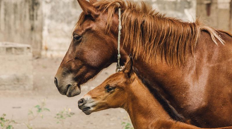 Horses in countries such as Senegal are among those to benefit from the BrookeCheck app.