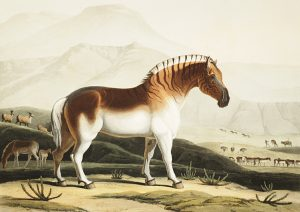 Samuel Daniell (1775-1811) captured the elegant quagga (Smithsonian)