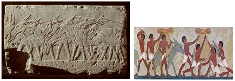 A bas-relief work, left, and a painting from ancient Egypt showing the use of donkeys for daily work.