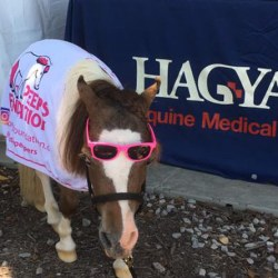 Hagyard equine joins new corporate veterinary group