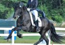 """Dressage"" vs. classical training: An uphill battle for horses"