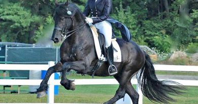 Friesian dressage stallion Thys with trainer Liz Austin. Image for illustration purposes only. © Betsy Nye