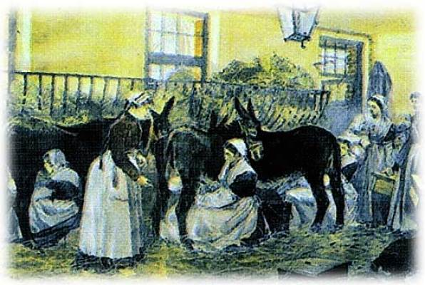 Collecting donkey milk at the St Vincent de Paul Hospital in Paris in the 19th century.
