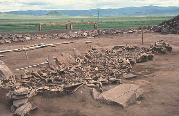 The excavation of the Kurgan Arzhan 2 site in Tuva, Siberia. This is tomb number 16, revealing 14 exhumed horse skeletons. The tomb dates back 2700 years. Photo: © Michael Hochmuth, German Archaeological Institute, Berlin