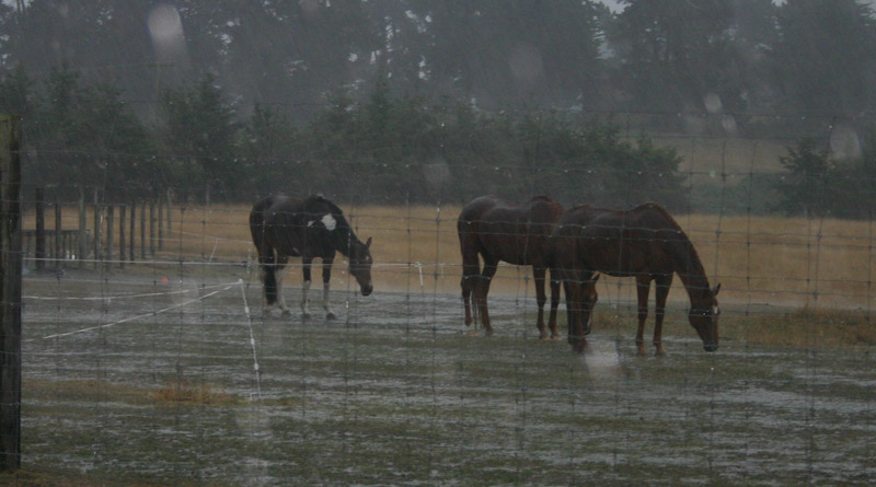 New research shows that horses are more likely to see out shelter from the sun and insects than from cold, wet weather, which makes donkeys run for cover.