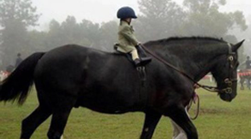 Extra short and extra tall riders often face saddle fitting issues.