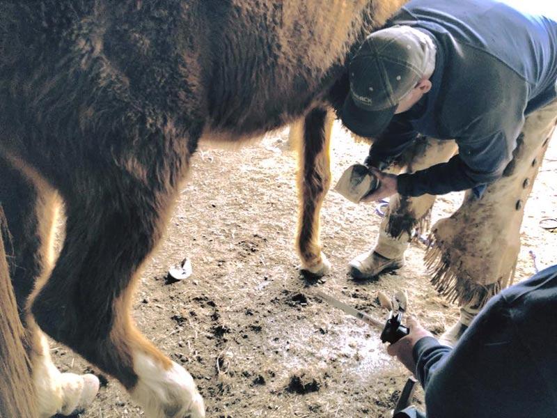 More than 80 horses taken into care in Oregon - Horsetalk co nz
