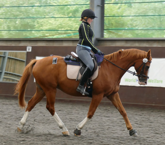 A rider classed as moderate weight taking part in the study.