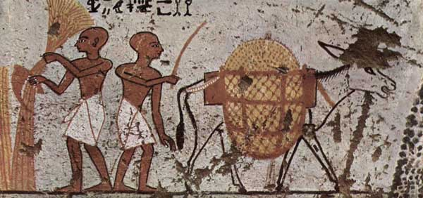 This Egyptian painting from 1298-1235 BC depicts a donkey as a beast of burden.