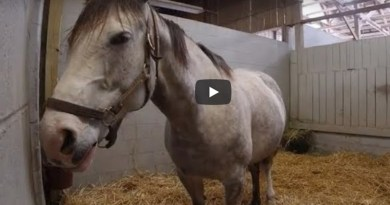 Watch live: Crowdsourced racehorse foal due any minute