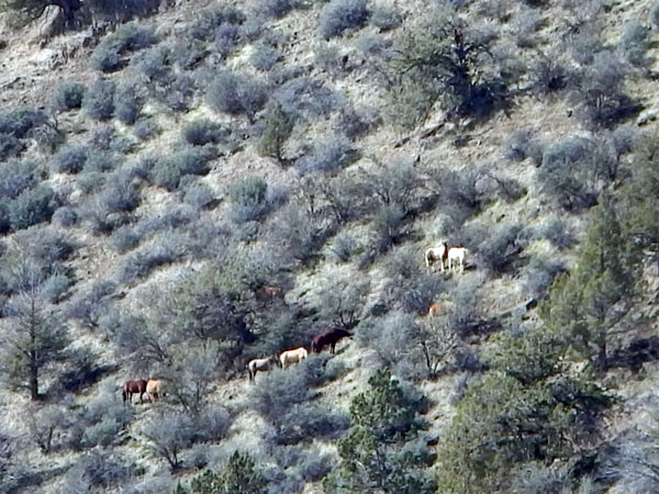Wild horses grazing on a steep mountainside.