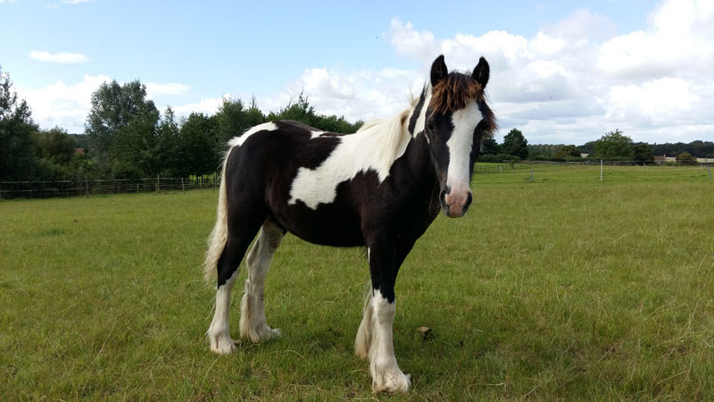 Rocket has thrived in the care of World Horse Welfare, and is now ready to be rehomed.