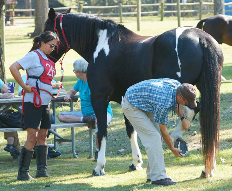 Horses will (hopefully) learn to standing quietly for a veterinary exam.