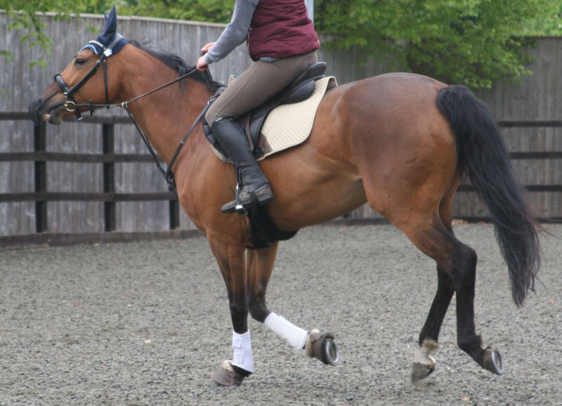 """""""If we wait until a lameness gets really 'big,' then we know a horse has already been compensating for a long time."""""""