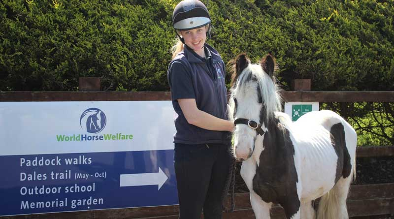 """Groom Katie holds Melvin Andrews at Penny Farm, where he is settling in. She says that Melvin is """"a very sweet little pony who has a bit of a cheeky side!"""" Photo: World Horse Welfare/Twitter"""