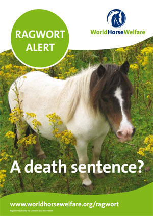 World Horse Welfare has produced a leaflet on ragwort.