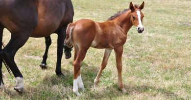 Results indicate that the 75 maternal lineages covered in the study developed from at least eight ancestral founder mares.