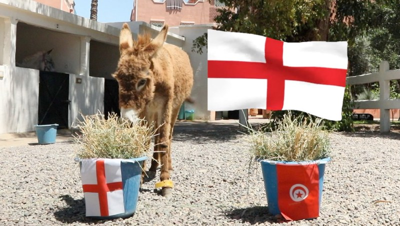 Diwa correctly chose England over Tunisia in Group G's first match day.