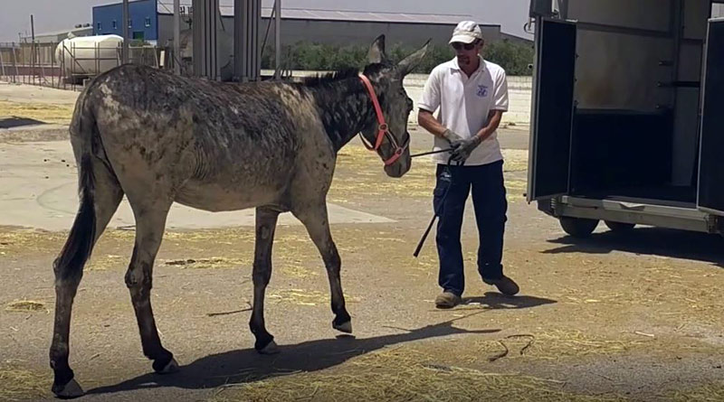 Flor was rescued from neglect by Refugio del Burrito, the Spanish branch of international charity The Donkey Sanctuary.