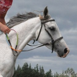 70 reasons for not using a bit: Your horse may thank you