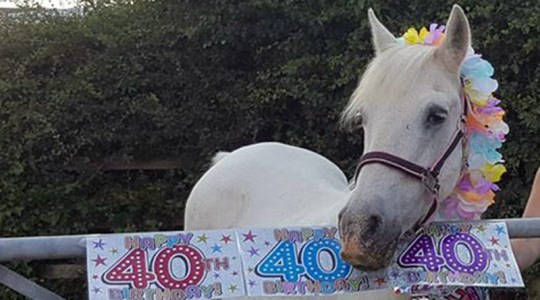 Rehomed mare Ella has just turned 40, 10 years after being taken into care by World Horse Welfare.