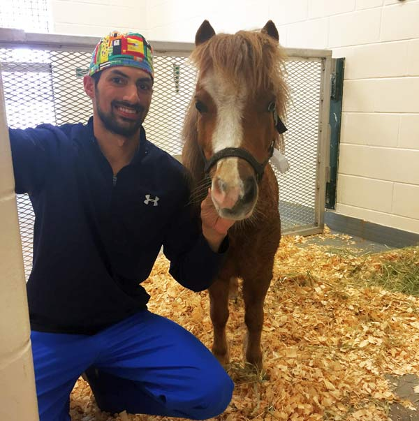 Rico, a 3-year-old miniature horse, with Dr Andrew McClain, a large animal surgery resident, at the time of Rico's surgery in April 2017.