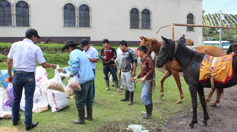 Thanks to a public appeal in the UK and USA, Brooke and its sister organisation Brooke USA was able to provide food, water and emergency veterinary treatment to working equines in the areas worst affected by June's Fuego volcano eruptions.