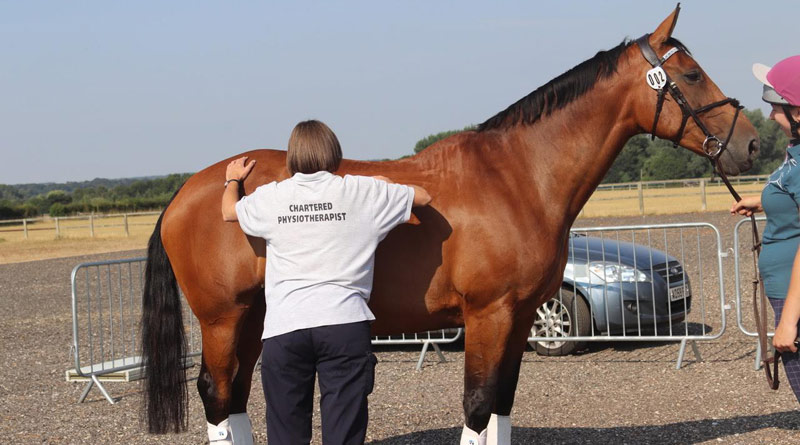 Physiotherapist Jo Spear assesses a horse before its ridden test.