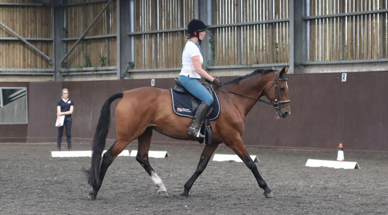 A horse undergoing a ridden test during the study led by Dr Sue Dyson.