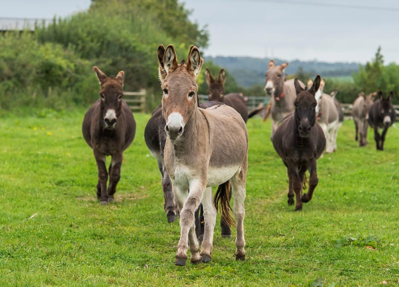 The Donkey Sanctuary has launched a new quality of life assessment tool to support donkey owners and professionals.