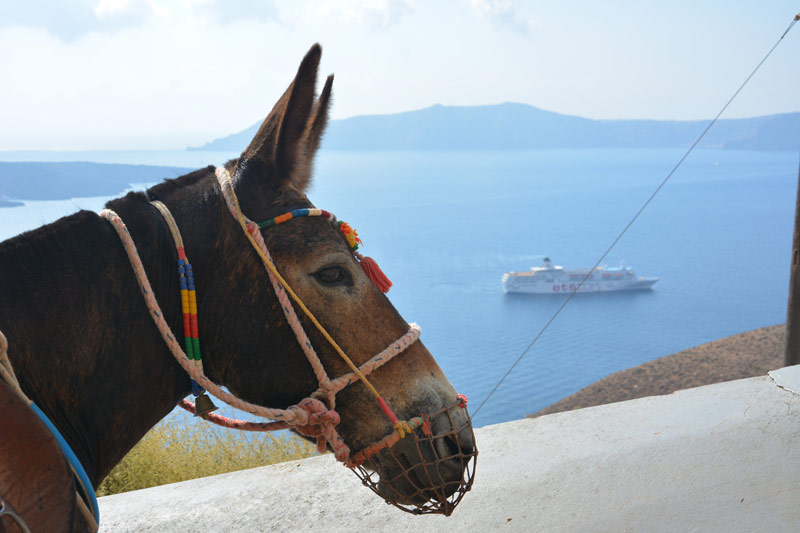 The Donkey Sanctuary launches #intheirhooves this week to draw attention to working donkeys and mules in holiday hotspots such as Santorini.
