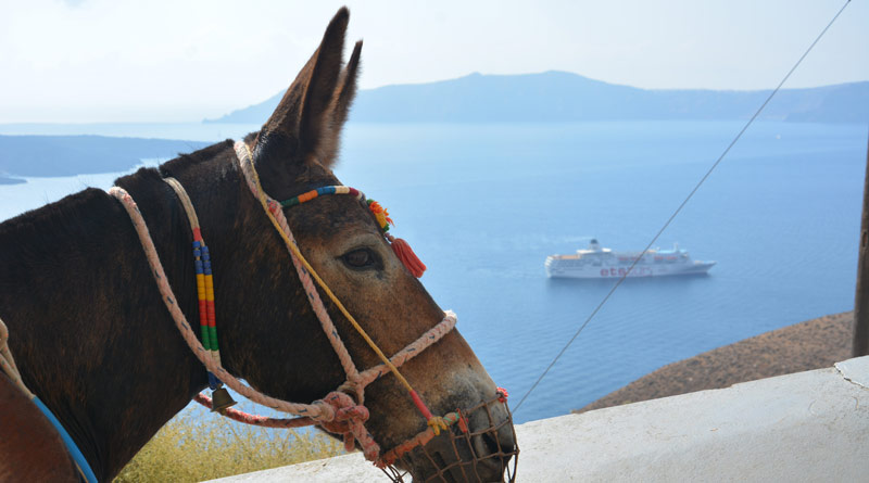 Santorini Mayor Anastasios-Nikolaos Zorzos has pledged to improve the conditions for working equines on the Greek island. © The Donkey Sanctuary